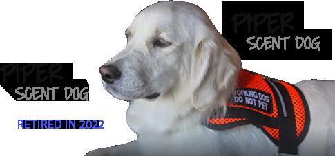 Piper - Scent Dog